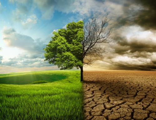 Odlesňovanie a jeho možné fatálne dôsledky do budúcnosti